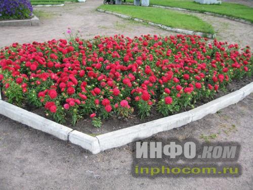 Шлиссельбург, клумба с цветами