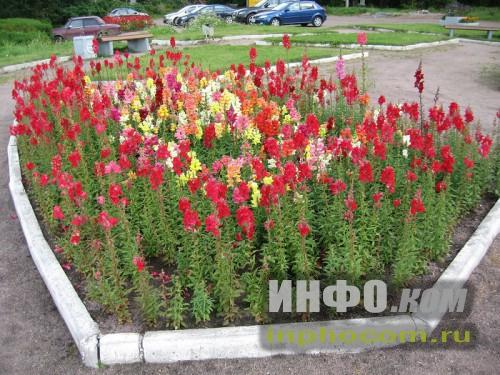 Шлиссельбург, цветы