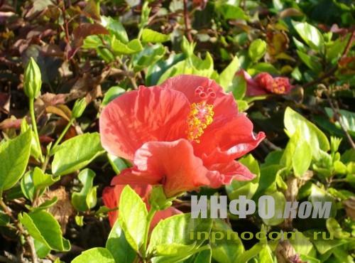 Израиль. Аленький цветочек