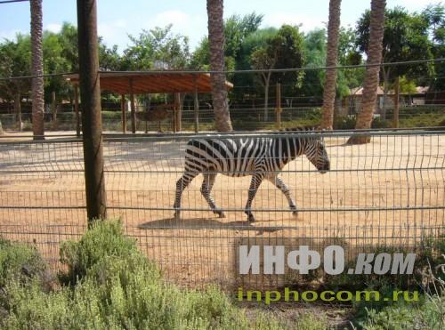 """Израиль. Зоопарк """"Хай парк"""""""
